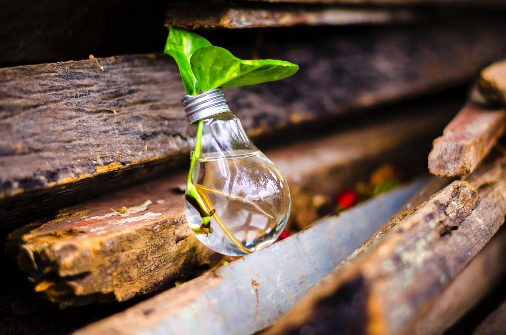 leaf in water in lightbulb on wood; innovation; patent